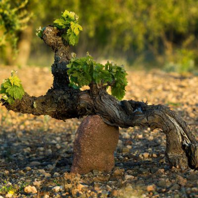 2017 – Land Scouting in the Vineyard