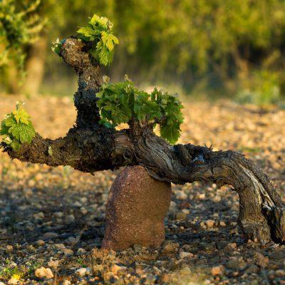 2017 – Sorties de repérage viticole