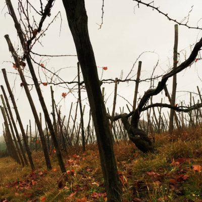 2017 – Les Vignobles du Nord Piémont