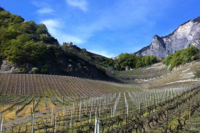 2019 Automne – Hiver – Les Dégustations Wine Rose
